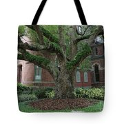 Tampa Tree  Tote Bag