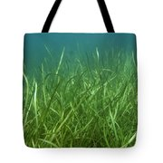 Tapegrass In Freshwater Lake Tote Bag