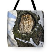 Tawny Owl Strix Aluco In Nest Hole Tote Bag