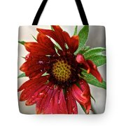 Teary Gaillardia Tote Bag