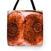 Tem Of Zygote Tote Bag by Omikron