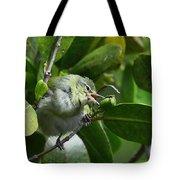 Tennesse Warbler Eating Mangrove Tote Bag