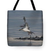 Tern Emerging With Fish Tote Bag