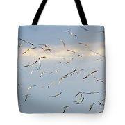 Terns Flying Away Tote Bag