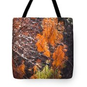 Texas Orange Tote Bag