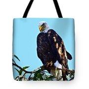 That Eagle Stare Tote Bag