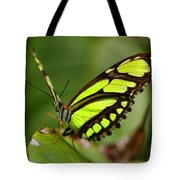 The Beautiful Color Of A Malachi Butterfly Tote Bag
