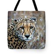 The Cheetah Stare Tote Bag