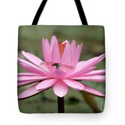 The Dragonfly And The Pink Water Lily Tote Bag