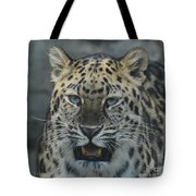 The Eyes Of A Jaguar Tote Bag