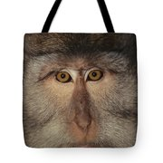 The Face Of A Long-tailed Macaque Tote Bag