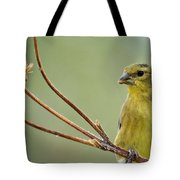 The Finch  Tote Bag