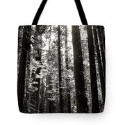 The Forest Through The Trees Tote Bag