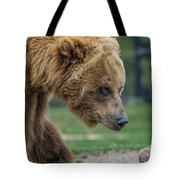 The Grizzly In Spring Tote Bag