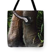 The Hindquarters Of A Malaysian Tote Bag