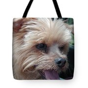 The Late Rocky Tote Bag
