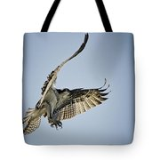 The Magnificent Osprey  Tote Bag