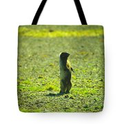 The Marmon Takes A Look Tote Bag