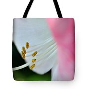 The Naked Lady - Hippeastrum Tote Bag