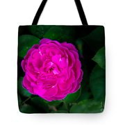 The Old Red Rose Tote Bag