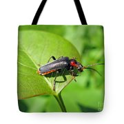 The Rednecked Bug- Close Up 2 Tote Bag