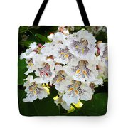 The Southern Catalpa Tote Bag