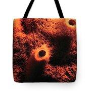 The Sponge Tote Bag