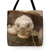 The Tortoise  Tote Bag