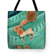 Thermophile Bacteria Tote Bag