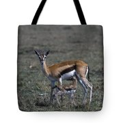 Thomson Gazelle And Newborn Calf Tote Bag