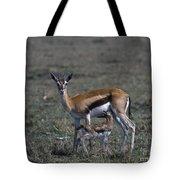 Thomson Gazelle And Newborn Calf Tote Bag