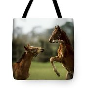 Thoroughbred Foals Playing Tote Bag