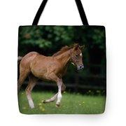 Thoroughbred Horse, National Stud Tote Bag