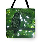 Three Barred Owls Tote Bag
