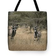 Three Beisa Oryxes In Kenyas Samburu Tote Bag