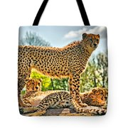 Three Cheetahs Tote Bag