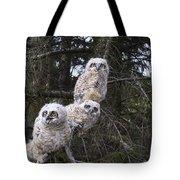 Three Great Horned Owl Bubo Virginianus Tote Bag