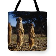 Three Meerkats With Paws Poised Neatly Tote Bag