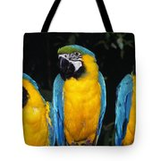 Three Parrots Tote Bag