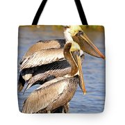 Three Pelicans On A Stump Tote Bag