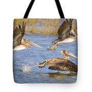 Three Pelicans Taking Off Tote Bag
