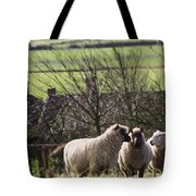 Three Sheep In A Field With Stone Tote Bag