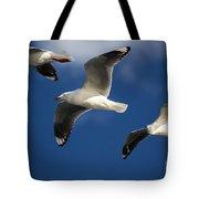 Three Silver Gulls Tote Bag