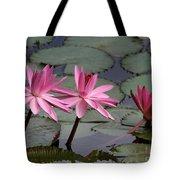 Three Sweet Pink Water Lilies Tote Bag
