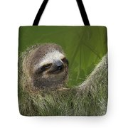 Three-toed Sloth Tote Bag by Heiko Koehrer-Wagner