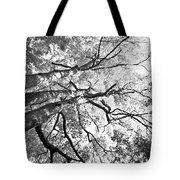 Three Trees Reach For The Sky Black And White Tote Bag