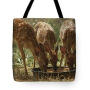 Three White-tailed Deer Fawns Tote Bag