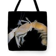 Tidepool Ghost Shrimp Tote Bag