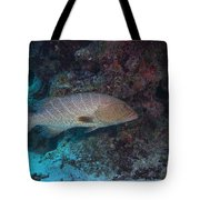 Tiger Grouper Swimming Along The Bottom Tote Bag