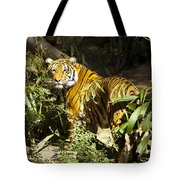 Tiger In The Rough Tote Bag